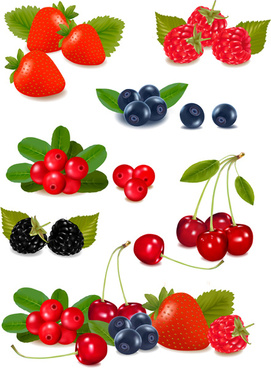 vivid berry design elements vector