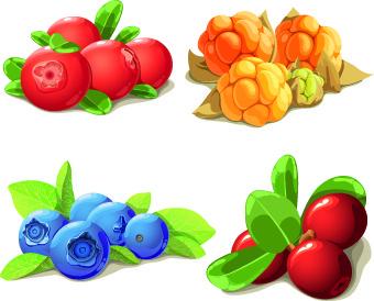 vivid berry design vector
