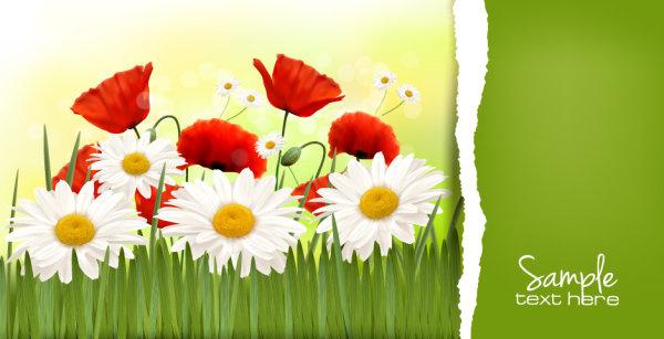 vivid chrysanthemum vector background
