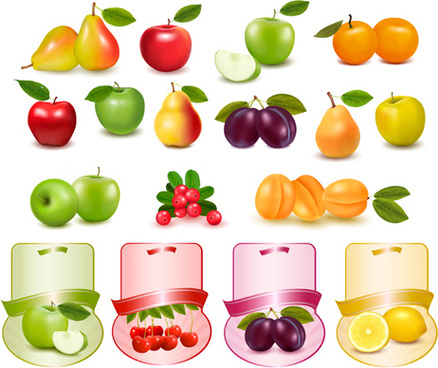 vivid fresh vegetables and fruits vector