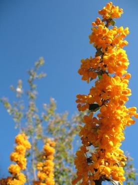 vivid orange flowers
