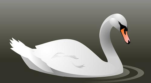 vivid swans elements vector