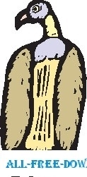 Vulture 07