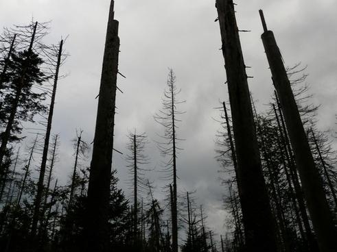 waldsterben dead death