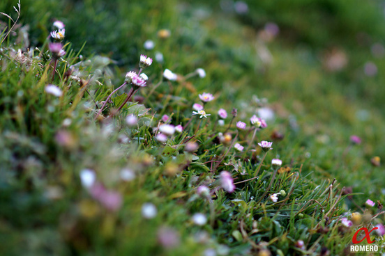 walimex 85 daisies