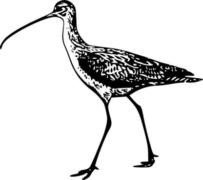 Walking Bird clip art