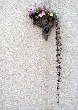 wall flowers plants