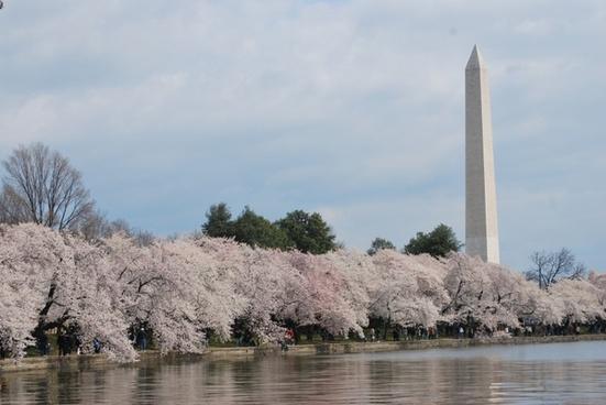 washington monument tree