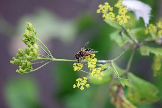 wasp on a plant 2