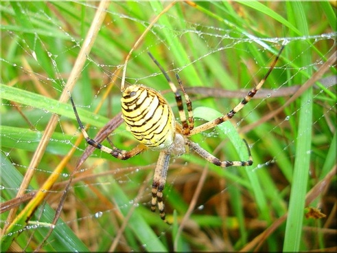 wasp spider meadow nature