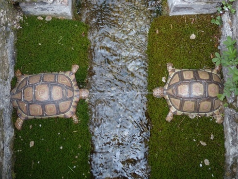 water feature turtles hellbrunn