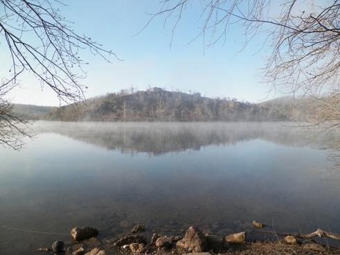 water fog tree