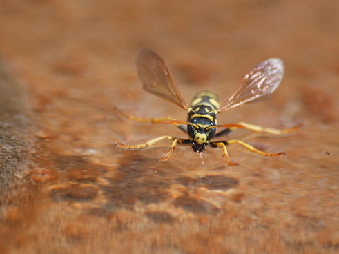 water landing