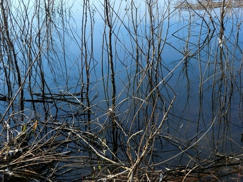 water meets weeds 112