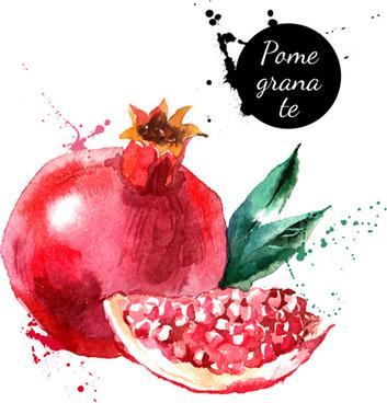 watercolor drawn pamegranate vector