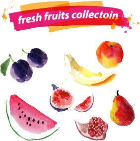 watercolor fresh fruits set vector