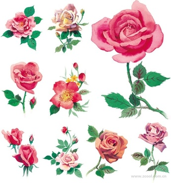 watercolor style roses highdefinition picture pink roses 9p