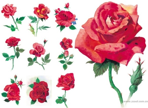 watercolor style roses highdefinition picture red rose 10p