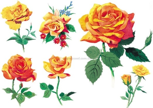 watercolor style roses highdefinition picture yellow rose 6p
