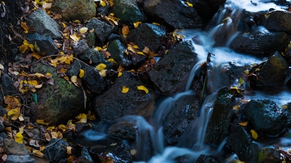 waterfall leaves water