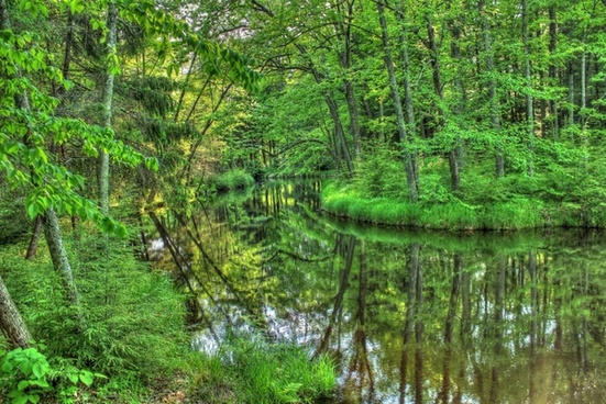 waterway through the forest at brunet island state park wisconsin