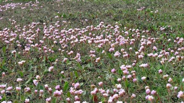 watt flowers flowers wadden sea
