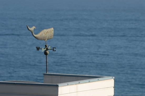 weathercock of whale