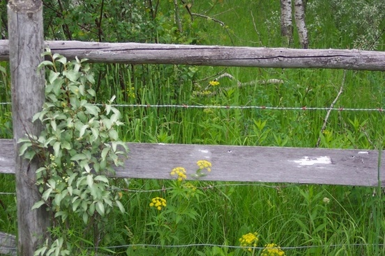 weathered fence post