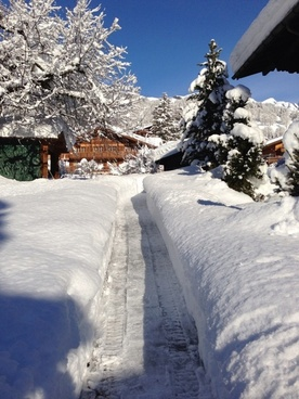 web snowy deep snow