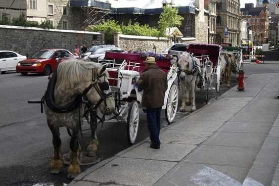 wedding coach horses