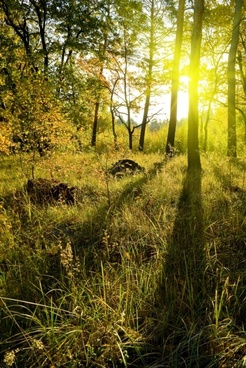 weeds under the sunset woods highdefinition picture