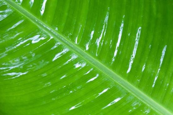 wet leaf detail