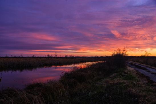 wetlands sky