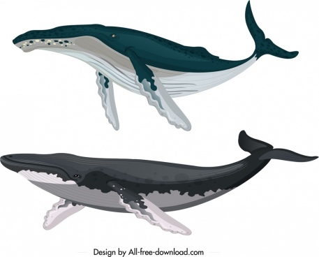 whale creature icons colored cartoon sketch