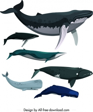 whale icons set colored cartoon sketch