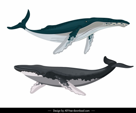 whale species icons swimming sketch