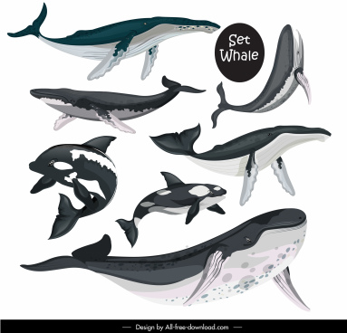whale species icons swimming sketch black white design