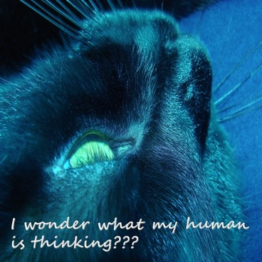 what is my human thinking