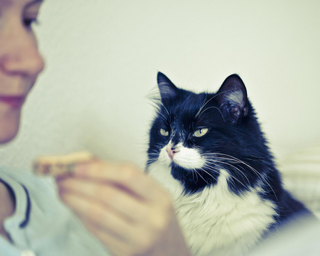 what we can learn from cats the key to success is focus and iron determination