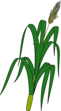 Wheat Plant Food clip art