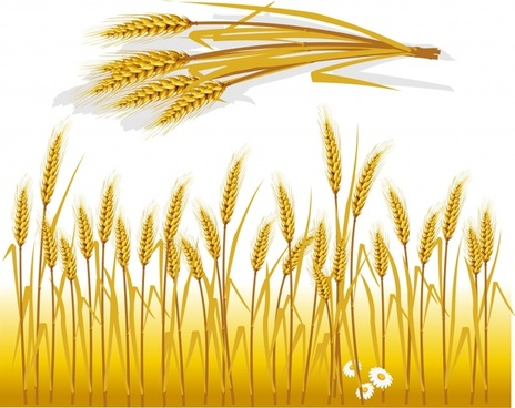 wheat background classical yellow decor