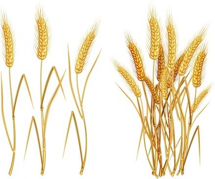 wheat icon classical golden handdrawn design
