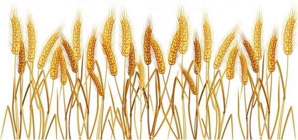 wheat background classical yellow handdrawn design