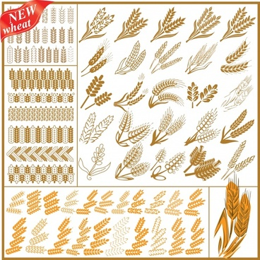 wheat wheat vector