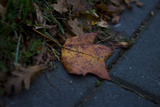 where nature meets sidewalk