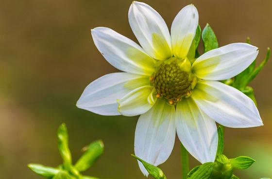 White background yellow green flowers free stock photos download white amp yellow mightylinksfo