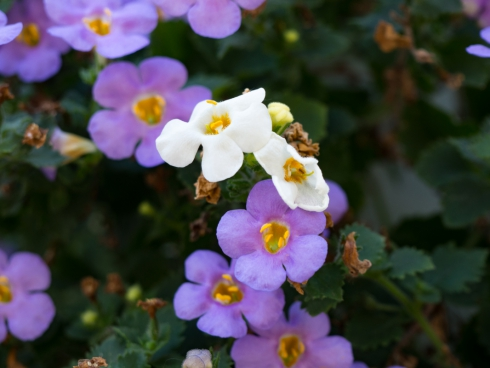 white and purple flowers 2