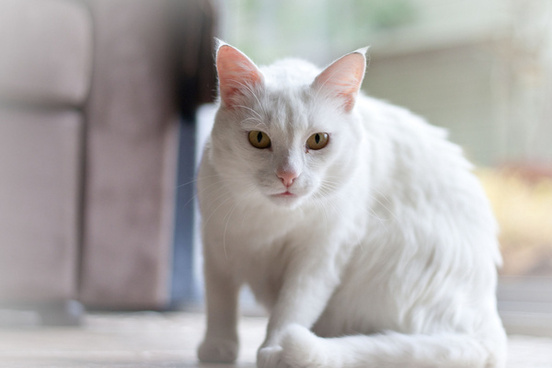 White Cat Image Free Stock Photos Download 7 991 Free Stock Photos For Commercial Use Format Hd High Resolution Jpg Images