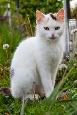 white cat sitting