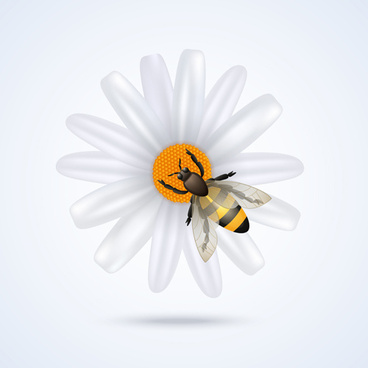 white flower with bee vector